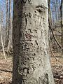 Meeman-Shelby Forest State Park Shelby County TN 2014-02-23 007.jpg