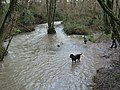 Mells River - geograph.org.uk - 346558.jpg