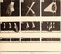 Memorie della Reale Accademia delle scienze di Torino. (1904) (14746909666).jpg