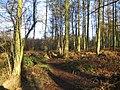 Meriden Shafts Wood - geograph.org.uk - 98715.jpg