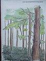 Merzse Marsh Nature Trail, 8th station, birch forest botanical illustration, 2016 Rákosmente.jpg