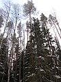 Metsä, Koskue.JPG