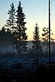 Metsäaukean laita, Nousiainen.jpg