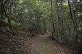 Minnamurra Rainforest - panoramio (22).jpg