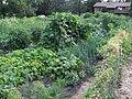 Minnesota veggie garden2.jpg