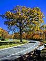 Mississippi River Boulevard, Saint Paul, Minnesota, in autumn.jpg