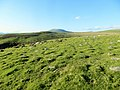 Moelfre in distance - from Mynydd Egryn - 30th May 2013 - panoramio.jpg