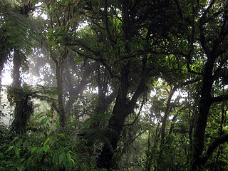 Monteverde Cloud Forest Reserve protected area