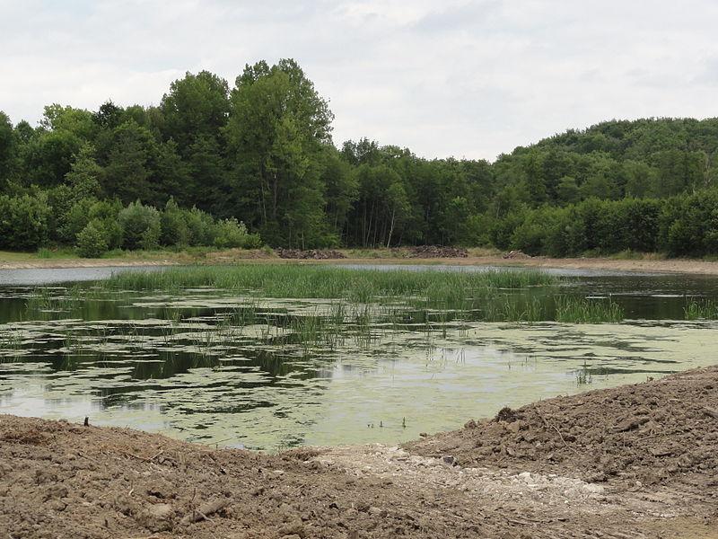 Montgobert (Aisne) étang
