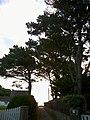 Morbihan Saint-Pierre-Quiberon Impasse Des Genets Le Matin 21092016 - panoramio.jpg