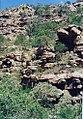 Moremi gorge 2.jpg
