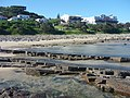 Morgan Bay - panoramio (1).jpg
