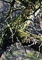 Mossy - panoramio.jpg