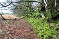 Mossy wall and trees - geograph.org.uk - 648762.jpg