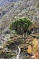 Mount Kemiri (8187787179).jpg