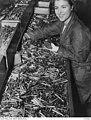 Munitions worker, NSW, Australia, WW2.jpg