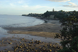 Murrays Bay - Looking down on Murrays Bay beach at low tide.