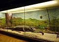 Musée zoologique de Strasbourg-Paysage africain du Tanganyka (1).jpg