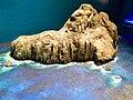 Museo de Ciencias Naturales Federico Carlos Lehmann 17-edit.jpg
