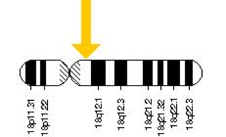 NPC1 - NPC1 gene is located on the long (q) arm of chromosome 18 at position 11.2.