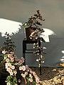 Nagoya Castle Chrysanthemum Competition 2017 14.jpg