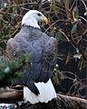 National Aviary (13020200263).jpg