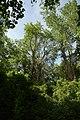 Nationalpark Donau-Auen Lobau Biberhaufen Mai 2016 03.jpg