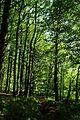 Nationalpark Jasmund - Stubnitz-Wald (1).jpg