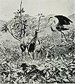 Natural history (1919) (14595106429).jpg