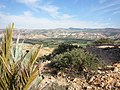 Nature des Monts Beni Chougranes Mohammadia 06.jpg