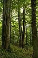 Nature reserve Žižkův vrch in summer 2012 (19).JPG