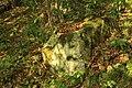 Nature reserve Dobrockovske hadce in autumn 2011 (38).JPG