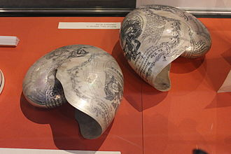 Chambered nautilus - Nautilus shells engraved to commemorate Horatio Nelson, displayed at Monmouth Museum