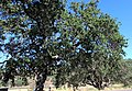 Neverland Ranch (14454902288).jpg