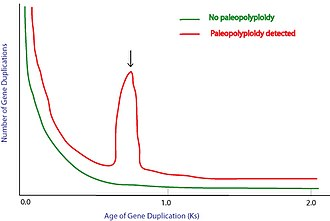 Paleopolyploidy - Detection of paleopolyploidy using Ks.