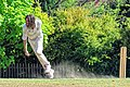 Nuthurst CC v. Henfield CC at Mannings Heath, West Sussex, England 072.jpg
