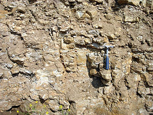 Oil shale in Estonia - Outcrop of Ordovician kukersite oil shale, northern Estonia