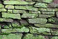 Old red sandstone wall - geograph.org.uk - 1701284.jpg