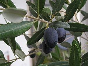 English: olives