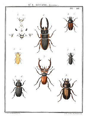 Guillaume-Antoine Olivier - A plate from Entomologie, ou histoire naturelle des Insectes, 1808