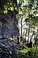 Ontika pank. Põhja-Eesti klint 2000 (02).jpg