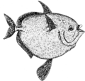 Opah (PSF).png