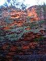 Orange rock contrasts rain soaked greenery (505665398).jpg