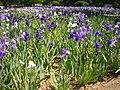 Orléans - parc floral (131).jpg