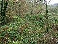 Overgrown trackbed - geograph.org.uk - 614217.jpg