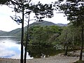 Páirc Náisiúnta Chill Airne - Killarney National Park (agost 2011) - panoramio (3).jpg