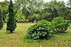 PL - Mielec - park Oborskich - Kroton 019.JPG
