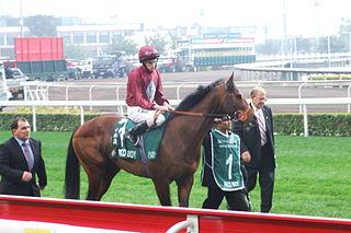 Paco Boy Irish-bred Thoroughbred racehorse