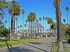Palms, Houses and Park (2144344823).jpg
