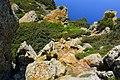 Parc national des îles de Zembra et Zembretta 99.JPG